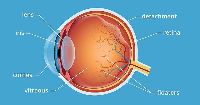 склоподібне тіло ока